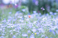 ✿flower* - ✿happiness✿