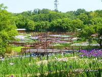 山田池公園の初夏風景アラカルト - デジカメ散歩悠々