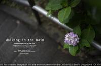 雨の日、35mmで朝の田園調布散歩。SIGMA 35mm F1.4 DG DN   Art  作例#SIGMA #紫陽花#写真 - さいとうおりのお気に入りはカメラで。