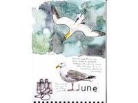 6月 海鳥がやって来る&ブルーベルも満開です! - ブルーベルの森-ブログ-英国のハンドメイド陶器と雑貨の通販