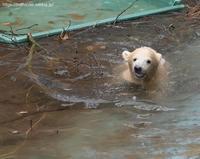 2021年4月天王寺動物園その1 - ハープの徒然草