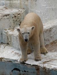 2021年4月天王寺動物園その2 - ハープの徒然草