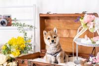 有名犬くるみちゃん - なのはペットクリニック 2021年3月24日新規オープン!