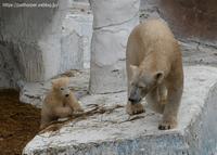 2021年4月天王寺動物園その4 - ハープの徒然草
