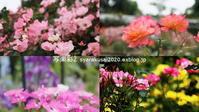 植物園に行く6月(2021年)1 - 写楽彩2