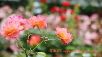 植物園に行く6月(2021年)2 - 写楽彩2
