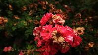 植物園に行く6月(2021年)3 - 写楽彩2