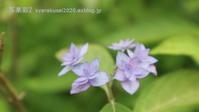 植物園に行く6月(2021年)4 - 写楽彩2