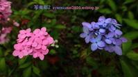 植物園に行く6月(2021年)5 - 写楽彩2