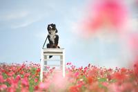 ちょこっとポピー畑まで♪(5月28日) - Reon with LR & Roses