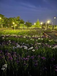 night walk! - HAPPY to ...