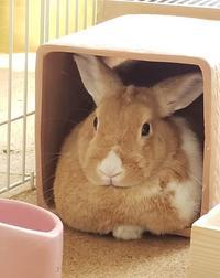 動物達の近況&納豆のハナシ - ヨモギ日記