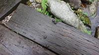 里山のおとしもの - 金沢犀川温泉 川端の湯宿「滝亭」BLOG
