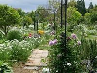 薔薇の庭・・・ - Country Road