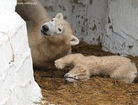 2021年4月天王寺動物園その7 - ハープの徒然草