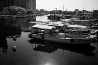 桜明石港 - YAJIS OFFICE BLOG