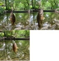 1日中雨でレッズ再開幕日は中止&ダンナさんは公園で釣り - しんしな亭 in シンシナティ ブログ