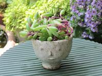 ミニ顔鉢のルビーネックレス - あるまじろの庭
