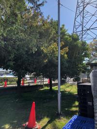 強剪定/シラカシ - 三楽 3LUCK 造園設計・施工・管理 樹木樹勢診断・治療