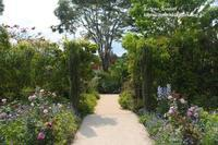 6月の中之条ガーデンズ2021#1シンボルツリーのローズガーデン - 風の彩りー3