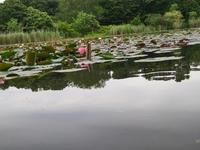 水面すれすれ - 散策で発見、自分の街のいいところ