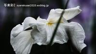 植物園に行く行く6月(2021年)7 - 写楽彩2