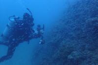 21.6.5(元)台風、接近の中 - 沖縄本島 島んちゅガイドの『ダイビング日誌』