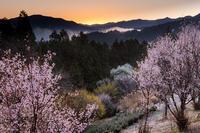 2021桜咲く奈良西吉野鹿場の桃源郷 - 花景色-K.W.C. PhotoBlog