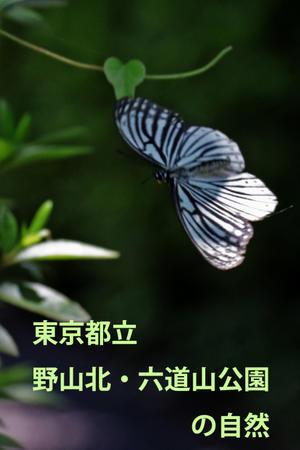 東京都立野山北・六道山公園の自然 - 還暦からのネイチャーフォト