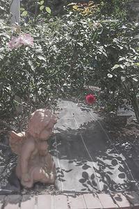 薔薇とエンジェル - スナップ心ここに