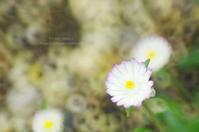 ピンクの縁取り - It's only photo 2