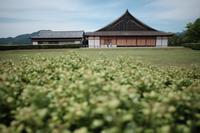 篠山散策 - yoshiのGR散歩