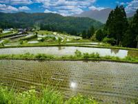 棚田百選 畑滋賀県 - ty4834 四季の写真Ⅱ