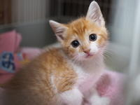 """【保護子猫""""みちくん""""成長記 14日め】近況と、""""イノチの重さ""""を考える - SAMのLIFEキャンプブログ Doors , In & Out !"""