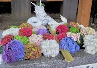 紫陽花の花手水☆ - じゅうべえな日々♪  「ファインダー越しにsmile☆」