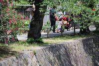 藤田八束の鉄道写真@西宮市新緑の美しさが日がる夙川公園で元気な子供たちの声がする・・・免疫力が上がります - 藤田八束の日記