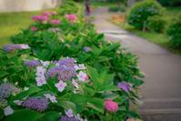 ✿紫陽花 - ✿happiness✿
