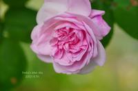 薔薇*2021・STORY15ファンタンラトゥール*・PART2 - FUNKY'S BLUE SKY