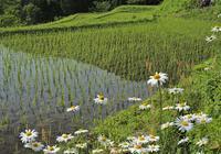 畔に咲く滋賀県 - ty4834 四季の写真Ⅱ