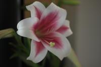花撮り - sakamichi