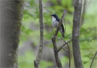 山の鳥たち - 野鳥がいるから