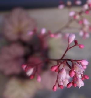 今朝の花 -