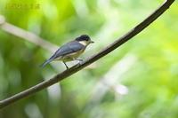 お山のカラ達 - 奥武蔵の自然