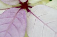 植物たちの造形 - 「シュクレはお留守番」スナップ日記
