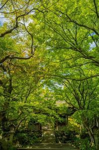常寂光寺~新緑・ツツジ - 鏡花水月