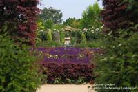 6月の中之条ガーデンズ2021#5ブリリアントなカフェガーデン - 風の彩りー3