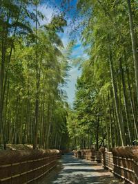 竹の道 1京都府 - ty4834 四季の写真Ⅱ