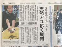 庄川の試し釣りに関する新聞記事6月6日 - 鮎毛鉤釣りの旅