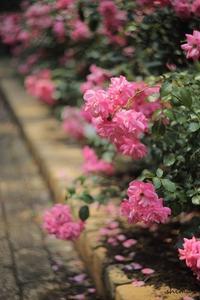 pink - マトリョーシカ
