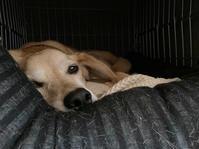 エアコン準備 - 犬と楽しむスローライフ